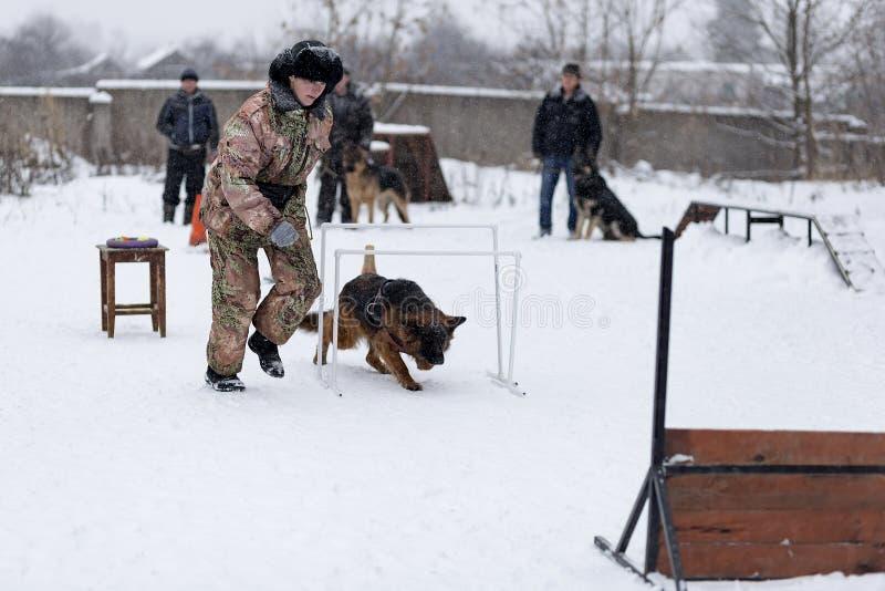 Concurrence pour des chiens photographie stock libre de droits