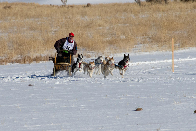 Concurrent de Rocky Mountain Sled Dog Championships image stock