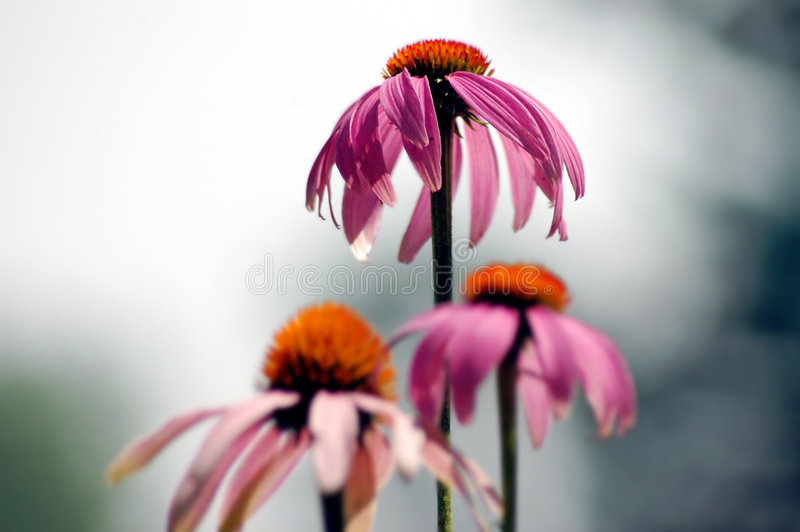 Concurrerende Bloemen royalty-vrije stock fotografie