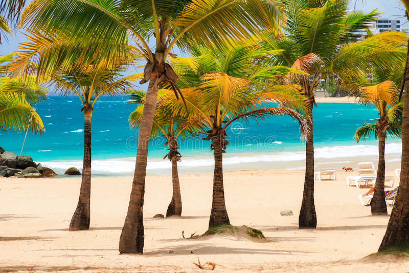 Condado palm beach royalty free stock images