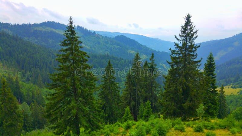 Condado Romênia de Dj125 Hargita imagens de stock royalty free