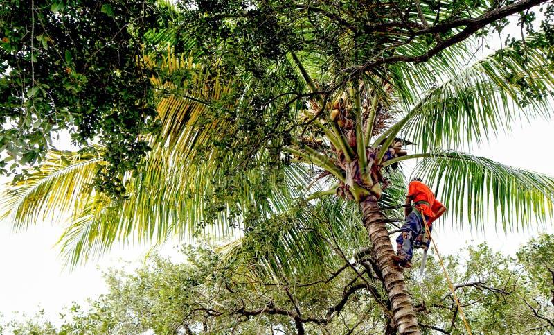 Condensador de ajuste del árbol en la palmera imagen de archivo