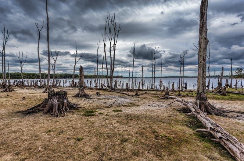 Condições da seca em um lago com árvores e cotoes inoperantes imagem de stock
