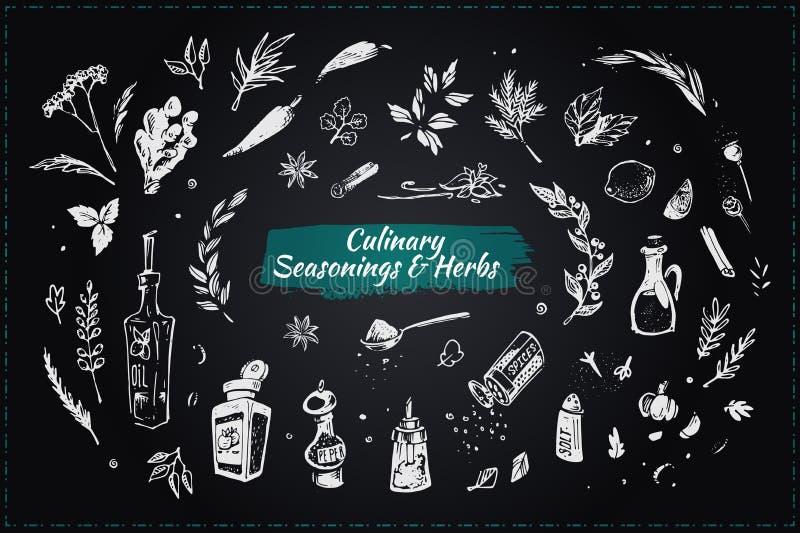 Condimenti ed erbe culinari Icone disegnate a mano illustrazione di stock