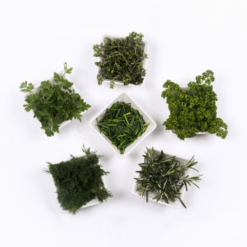 Condimento verde fresco de las hierbas fotografía de archivo libre de regalías