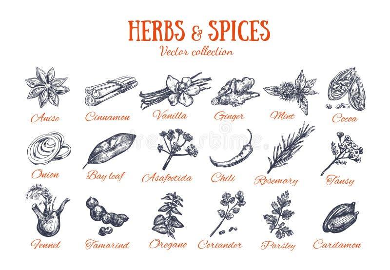 Condimentos 4 de las hierbas y de las especias stock de ilustración