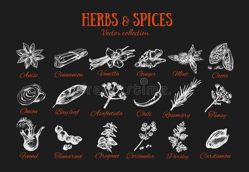 Condimentos 3 de las hierbas y de las especias stock de ilustración