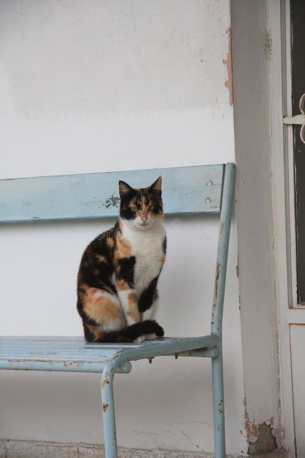 Condizione del gatto sulla sedia fuori della casa fotografia stock libera da diritti