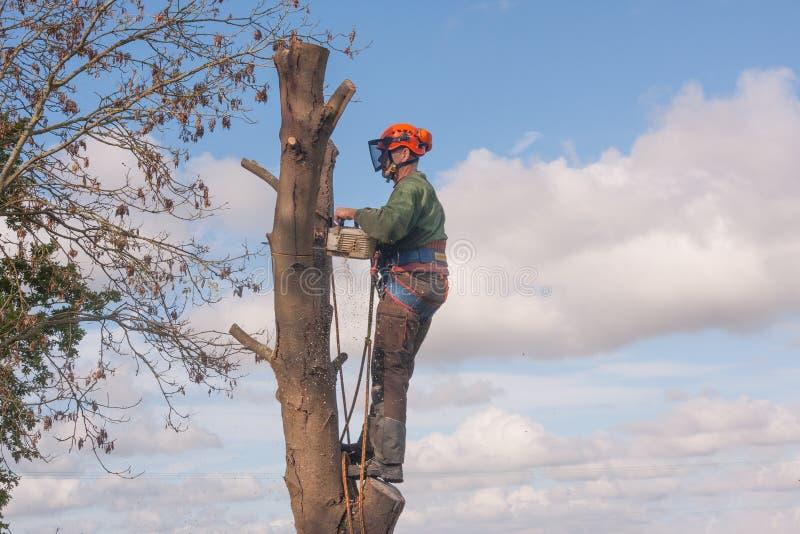 Condizione dell'uomo sull'albero fotografia stock libera da diritti