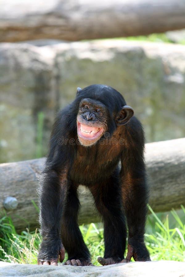 Condizione della scimmia immagine stock libera da diritti
