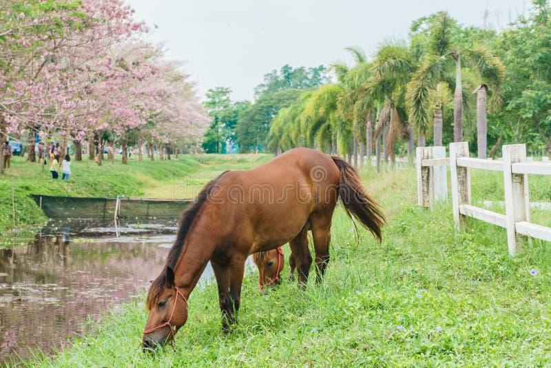 Condizione equina con l'erba verde, cavallo nella vista all'aperto immagini stock libere da diritti