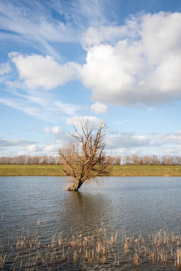 Condizione obliqua dell'albero nudo in acqua riflettente fotografia stock