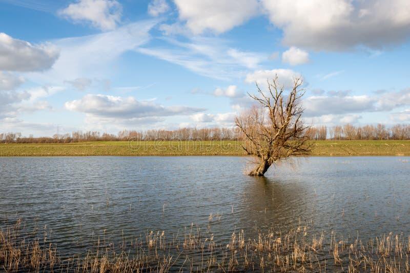 Condizione obliqua dell'albero nudo in acqua riflettente immagine stock libera da diritti