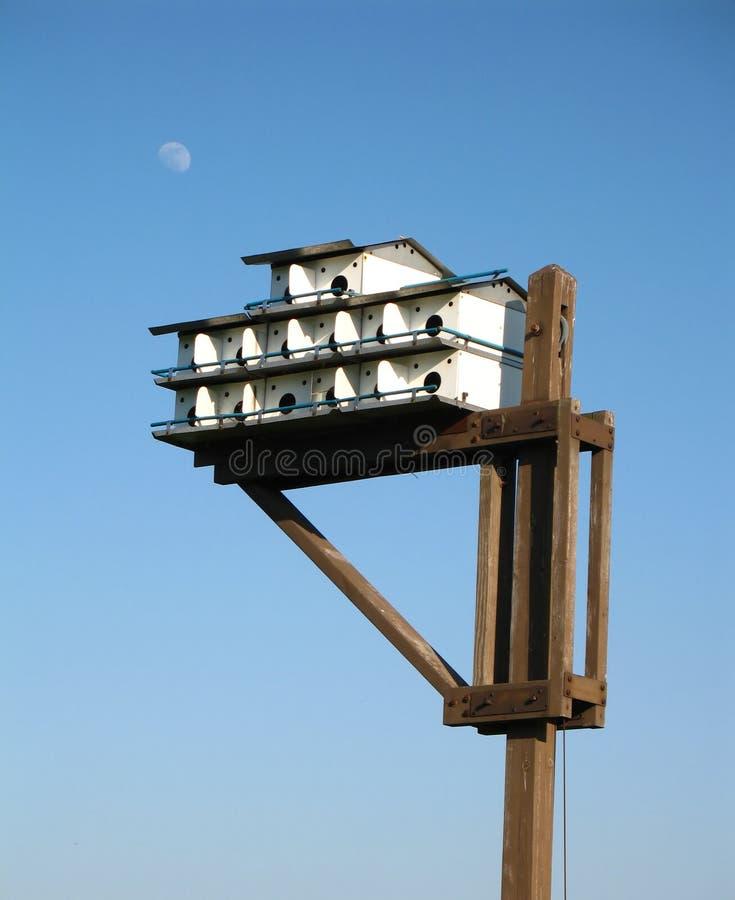 condo πουλιών στοκ φωτογραφίες