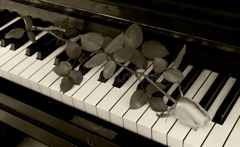 Condolence card - rose on piano stock images