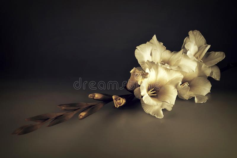 Condolence card with white gladiolus flower. On dark background stock photo