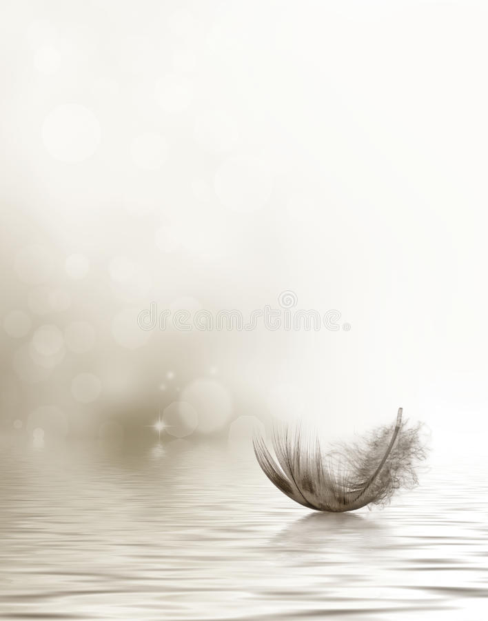 Free Condolence Or Sympathy Design With Feather Royalty Free Stock Photos - 39256628