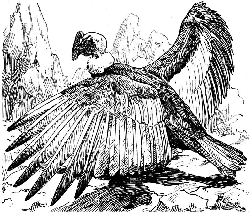 Condor-001-mo Free Public Domain Cc0 Image