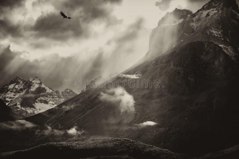 Condor di volo sopra il Torres Del Paine Mountains immagini stock