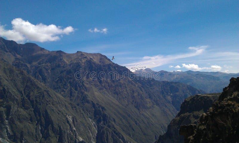 Condor die boven bergen vliegen royalty-vrije stock foto's