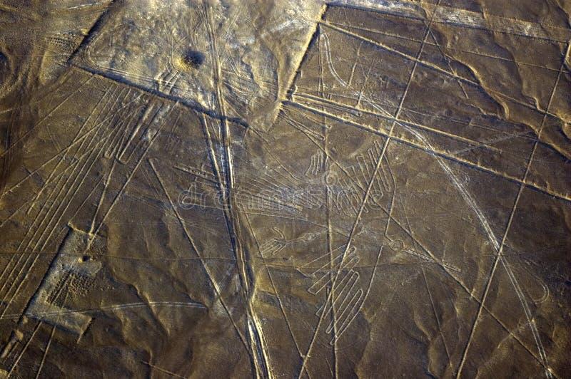 Condor, linhas de Nazca em Peru foto de stock royalty free