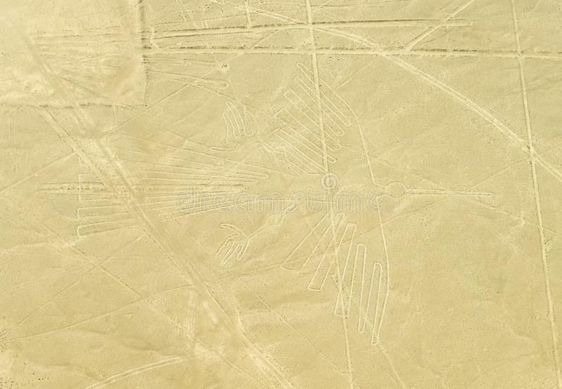 Condor, linhas de Nazca, Peru foto de stock