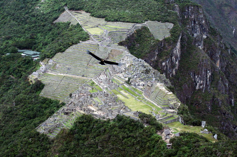 Condor on machu pichu. A condor is flying on the incas ruins of machu pichu in peru royalty free stock photos