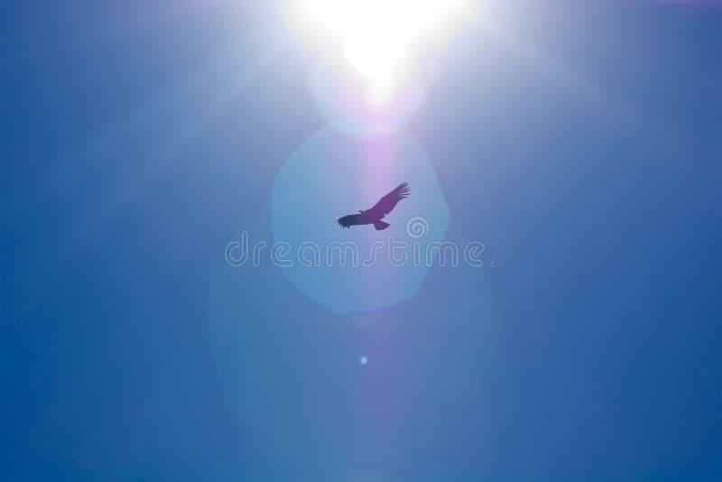 Download Condor Sun stock photo. Image of silhouette, soaring - 16145904