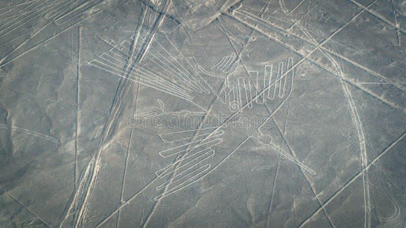 Condor zoals die in de Nasca-Lijnen, Nazca, Peru wordt gezien stock fotografie
