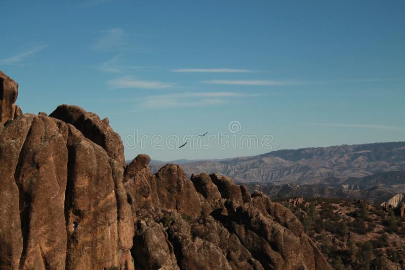 Condores de Califórnia fotos de stock royalty free