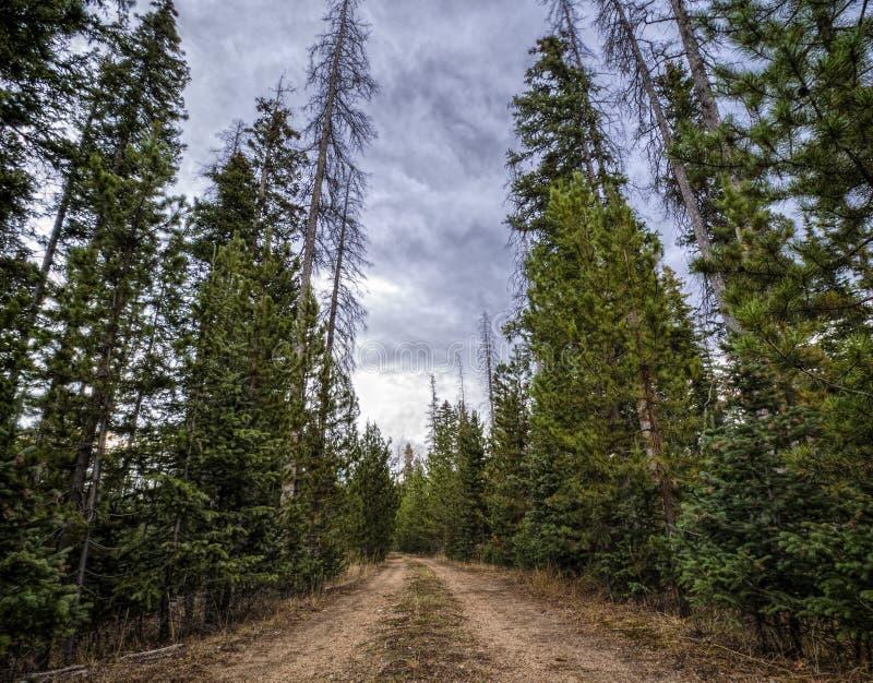 Condução através da floresta nacional da curva da medicina fotografia de stock