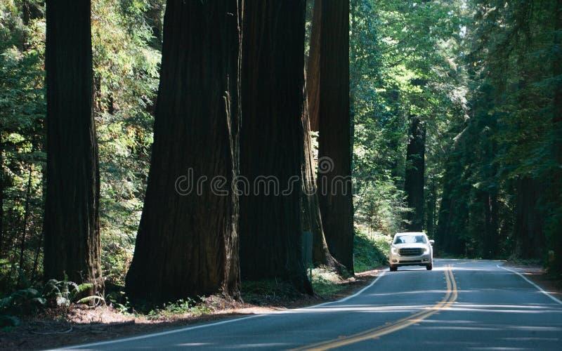 Conducción a través de la avenida de Giants foto de archivo libre de regalías