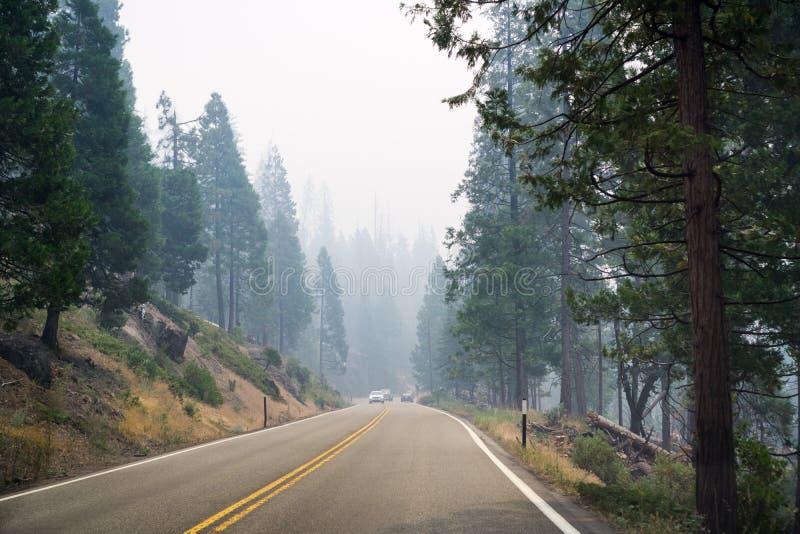 Conducción a través de un bosque en el parque nacional de Yosemite fotos de archivo