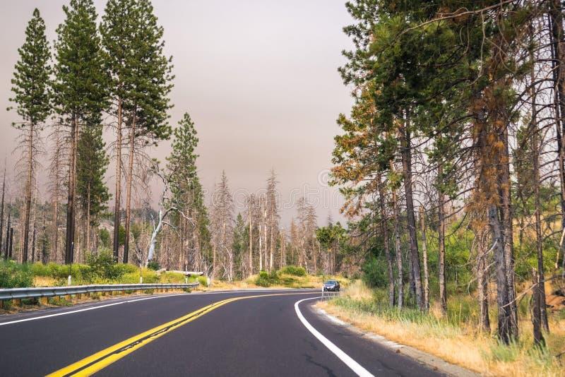 Conducción a través del parque nacional de Yosemite; cielo cubierto por el humo fotografía de archivo libre de regalías