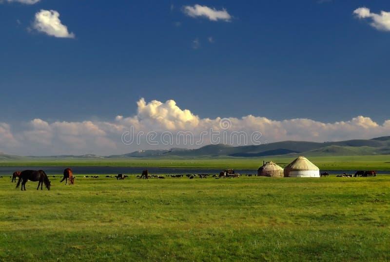 Conduce la tenda Yurt con i cavalli, supporto del Kirghizistan, lago Kol di canzone fotografia stock