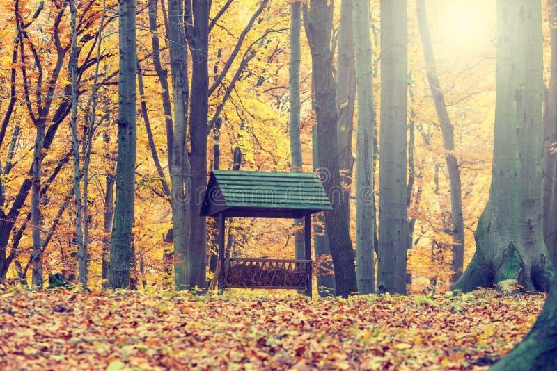 Conducteur d'animaux dans la forêt d'automne photo libre de droits