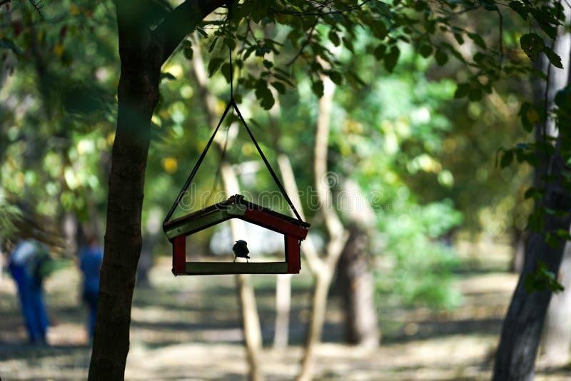 Conducteur d'oiseau sur un arbre avec un oiseau placé dans le parc de ville parmi les arbres sur le fond naturel brouillé avec de images libres de droits