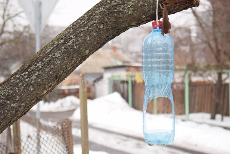 Conducteur d'oiseau d'une bouteille en plastique sur un arbre en hiver photo libre de droits