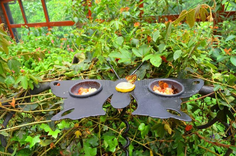 conducteur de papillon image stock