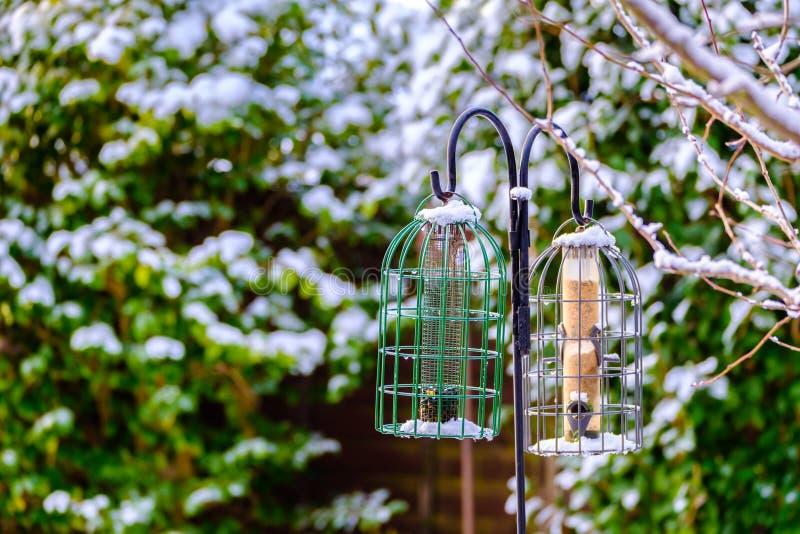 Conducteurs d'oiseau de jardin en hiver images stock
