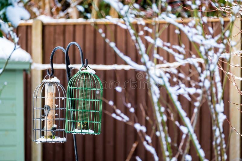 Conducteurs d'oiseau de jardin en hiver photo stock