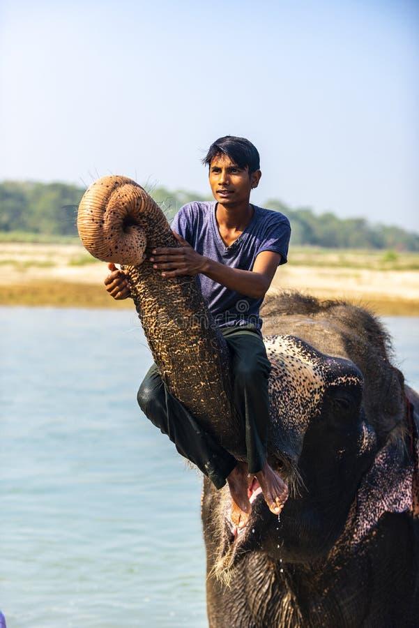 Conductores del elefante en Nepal fotos de archivo