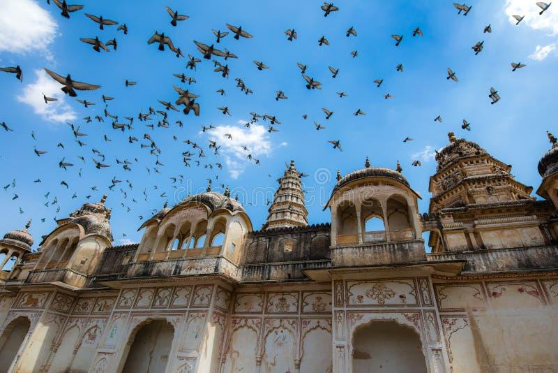 A conduit des colombes par le temple photographie stock libre de droits