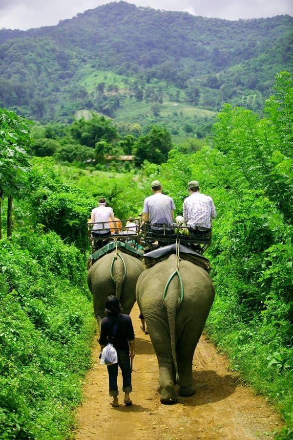 Conduite d'éléphant photographie stock libre de droits