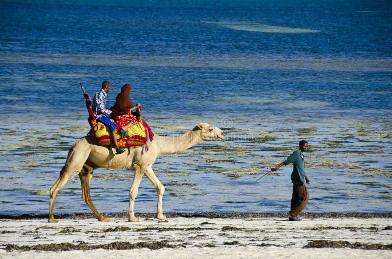 Conduite de chameau photo stock