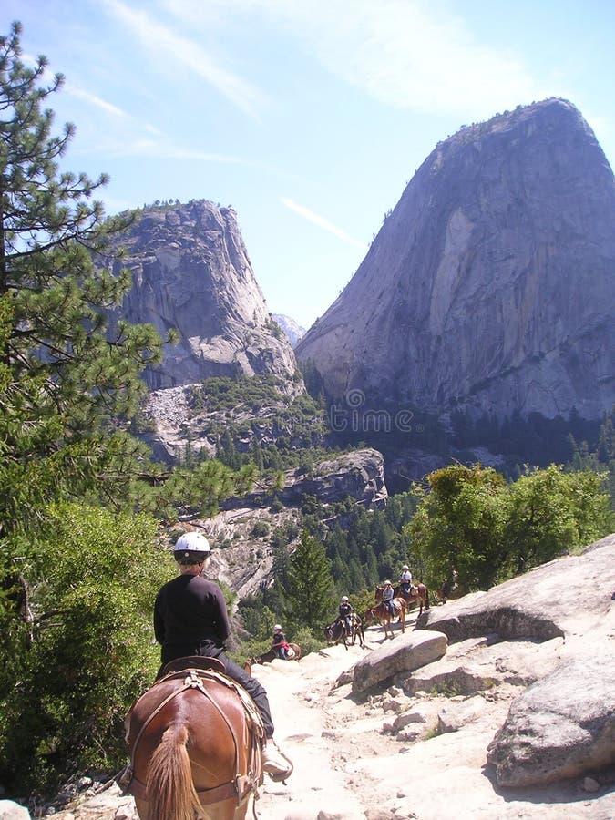 Conduite de mule de Yosemite photo libre de droits