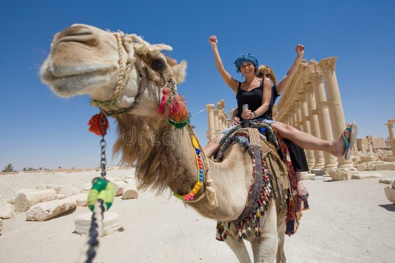 Conduite sur le chameau images libres de droits