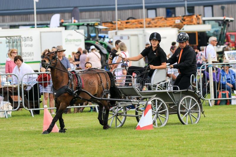 Condurre la carrozza a cavalli della concorrenza immagini stock libere da diritti