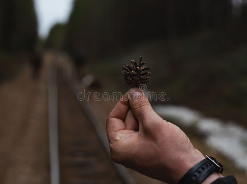 Cone de abeto na palma na floresta fotos de stock