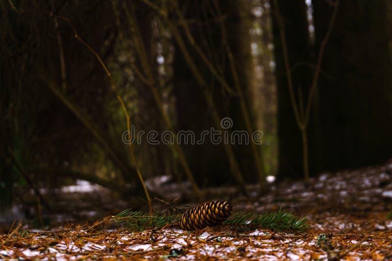 Cone de abeto no fim da floresta da neve na primavera acima fotografia de stock royalty free
